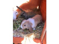 4 stunning baby rabbits looking for there forever home