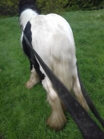 Nice colt pony