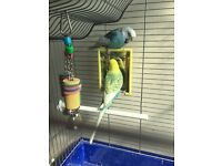 2x Budgies cage and accessories