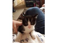 3 x 9 week male kittens for sale all lovely and friendly amd looking for new homes