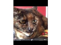 Tortashell 13 years old, not look into profit, looking for her retirement home.