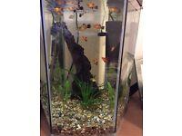 Hexagonal fish tank with 4 free platys