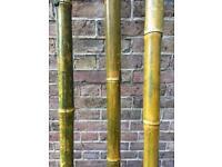 Bamboo Poles x 3