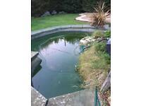 Pond fish and pump