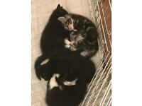 Kittens ready on the 29th of April