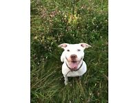 Home needed for pebbles