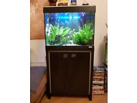less than 1 year old Aquarium with stand and accessory's