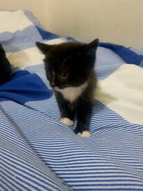 Cute kittens £55