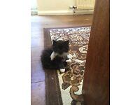 Fluffy baby kittens