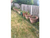 Garden Pots for Free