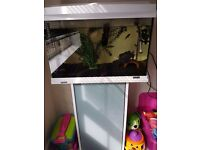 Tetra tank with fish for sale