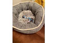 Puppy or kitten beds