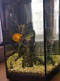 Fish with Aquarium and other accessories