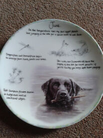 Danbury Mint Collectors plate on Wedgwood bone china. Year of the Labrador. The month of June