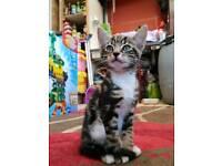 Beautiful male kittens
