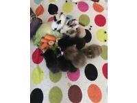 3 Baby Bunnies Remaining