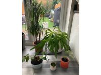5 house plants in mix of pots