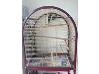 2x Green cheek Conures plus huge cage