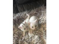 Kittens awaiting new loving homes