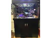 Aqua one 300 black marine/tropical fish tank aquarium with setup (delivery/installation)