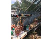 12ft by 8foot Greenhouse