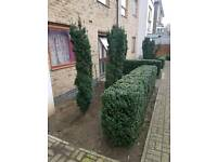 Looking for 2 bed with back garden