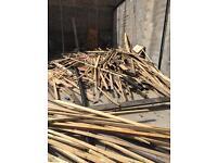Loads of new free wood