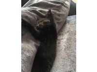 4 month old kitten looking for a forever home