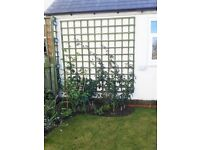 Garden trellis in forest green or natural wood colour for sale, prices below.