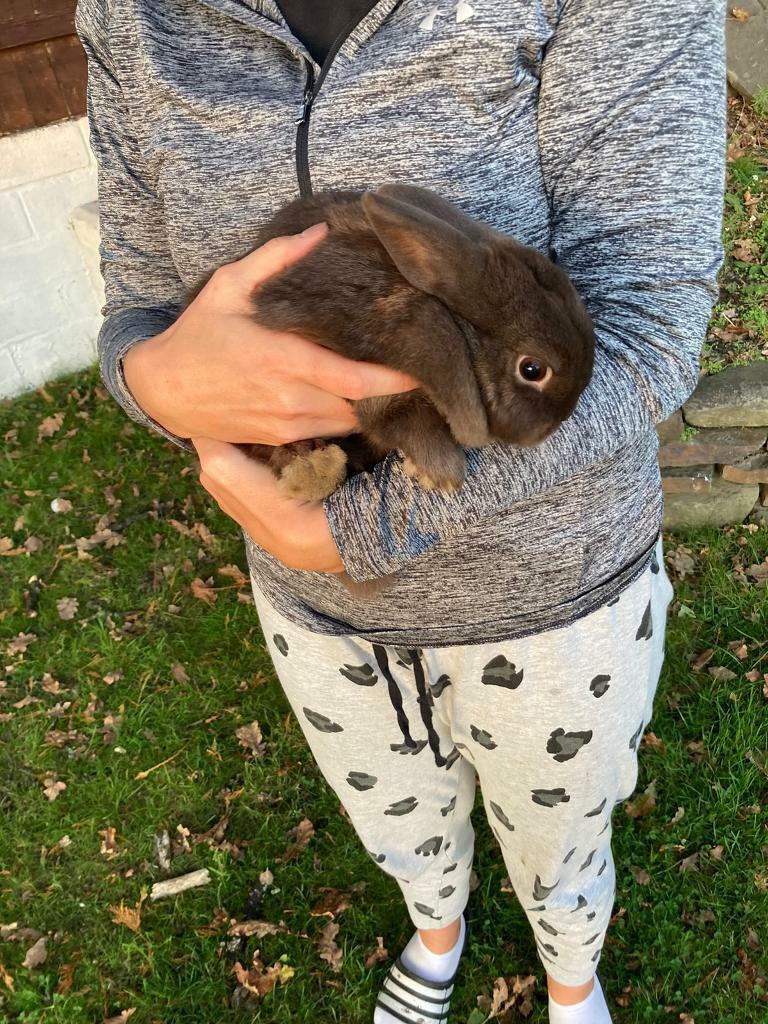 20 month old rabbits for sale.   in Pontardawe, Swansea   Gumtree