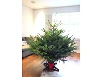 BRAND NEW - BOUGHT TODAY - CHRISTMAS TREE - 5.5FT TALL.