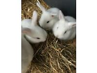 ❤️ Baby Bunnies ❤️