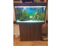 Large 270l Fish Tank includes complete set up and unit/stand