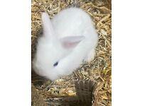 Baby bunny rabbits.