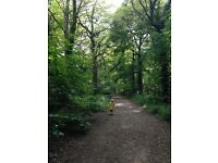 Experienced, friendly dog walking, cat sitting and dog boarding service in Havant
