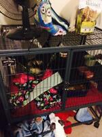 2 ferrets and ferret nation cage