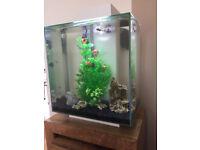 Fluval Edge 46l fish tank
