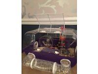 Hamster cage with Russian dwarf hamster