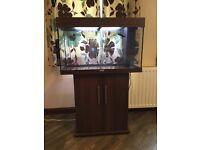 Jewel Rio 125 Aquarium with Stand