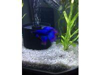 White modern fish tank/Aquarium