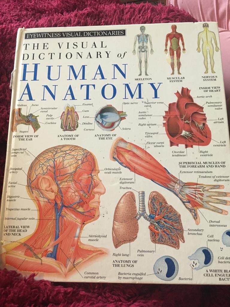 Visual Dictionary Of Human Anatomy In Maryhill Glasgow Gumtree