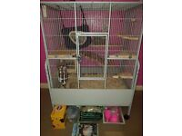 Chinchilla girls with cage and accessories