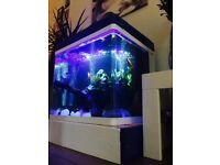 Red Sea Max 130 litre Fish Tank Aquarium