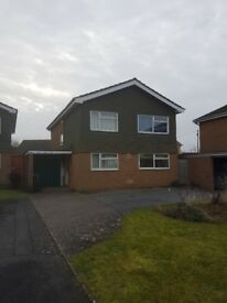 Single room to let in shared house