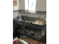 2young female guineapigs & large cage