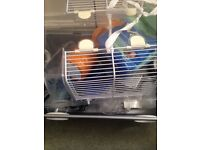 Hamster Cage + Food