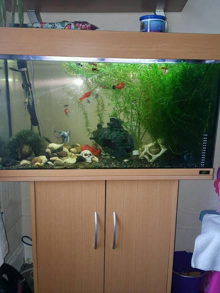 Freshwater jewel fish - 125ltr Jewel Fish Tank Full Set Up