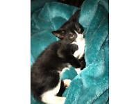 Kittens for sale £35 each