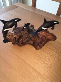 Orca killer whale family