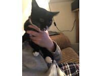 10 week old female kitten for a loving home